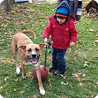 Adopt A Pet :: Mustang - Hamilton, ON