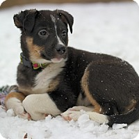 Adopt A Pet :: Bindi - Hamilton, ON