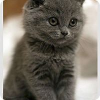 Adopt A Pet :: Neptune - Brockton, MA