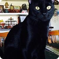 Adopt A Pet :: Scorch - Mesa, AZ