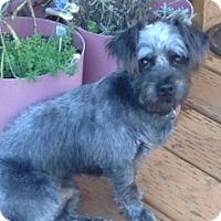 Adopt A Pet :: Harry - Bellingham, WA