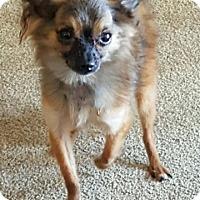 Adopt A Pet :: Ralphie - Elyria, OH