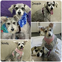 Adopt A Pet :: Sandy and Joaquin - Forked River, NJ
