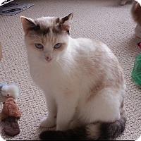 Adopt A Pet :: Selene - Monroe, GA