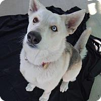 Adopt A Pet :: Buster - Seal Beach, CA