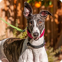 Adopt A Pet :: Linda - Walnut Creek, CA