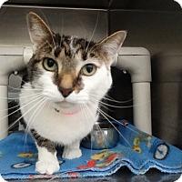 Adopt A Pet :: Bubzy - Elyria, OH