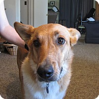 Adopt A Pet :: Tilly - Greeley, CO