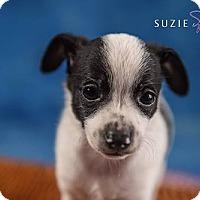 Adopt A Pet :: Bam Bam - Cary, NC