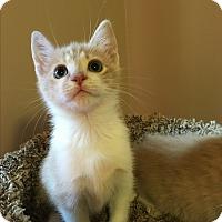 Adopt A Pet :: Hudson - Mount Laurel, NJ