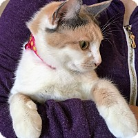 Adopt A Pet :: Milkie - Orange, CA