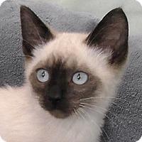 Adopt A Pet :: Cocoa - Redondo Beach, CA
