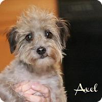 Adopt A Pet :: Axel - Benton, LA
