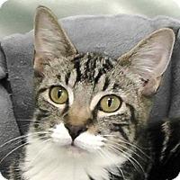 Adopt A Pet :: Bootsie - Redondo Beach, CA