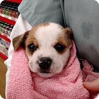 Adopt A Pet :: Sasha's Natalia - Lakeport, CA