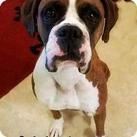 Adopt A Pet :: Mahzel - Hurst, TX