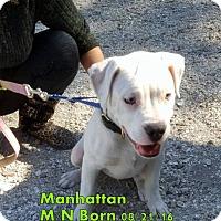 Adopt A Pet :: Manhattan - Englewood, FL