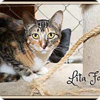 Adopt A Pet :: Lita Ford - Fallbrook, CA
