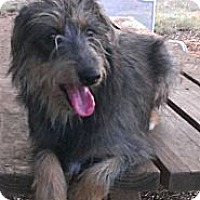 Adopt A Pet :: Gretta - Spring Branch, TX