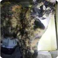 Adopt A Pet :: Torti - Strathmore, AB