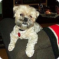 Adopt A Pet :: Peanut - Hamilton, ON