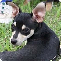 Adopt A Pet :: Phil - Ocala, FL