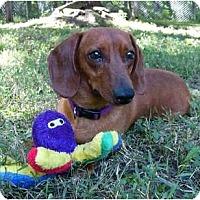 Adopt A Pet :: Dudley - Mocksville, NC