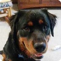 Adopt A Pet :: Finnegin - Kirkland, WA