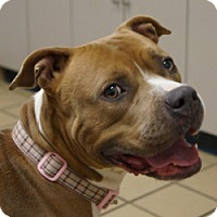 Terrier (Unknown Type, Medium) Mix Dog for adoption in Eatontown, New Jersey - Alize