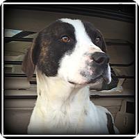 Adopt A Pet :: Robin - Indian Trail, NC