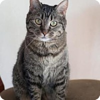 Adopt A Pet :: Miss Gilbert - Fort Collins, CO