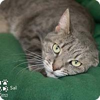 Adopt A Pet :: Sal - Merrifield, VA