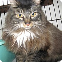 Adopt A Pet :: Basement Betsy - Coos Bay, OR
