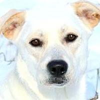 Adopt A Pet :: MADDIE(GORGEOUS-SO SMART!! - Wakefield, RI