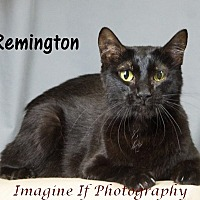 Adopt A Pet :: Remington (Remy) - Oklahoma City, OK