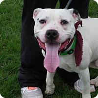 Adopt A Pet :: Indiana - Cleveland, OH