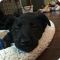 Adopt A Pet :: Murdock - Joliet, IL