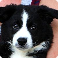Adopt A Pet :: Hoppy - Glastonbury, CT