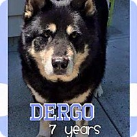 Adopt A Pet :: Dergo - North Haven, CT