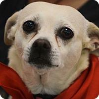 Adopt A Pet :: Princess - Fort Lauderdale, FL