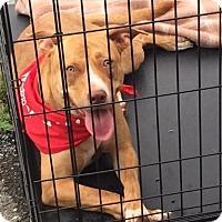 Adopt A Pet :: Rosie - Erwin, TN