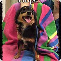 Adopt A Pet :: Hope - Harrisonburg, VA