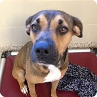 Adopt A Pet :: Teanna - Aiken, SC