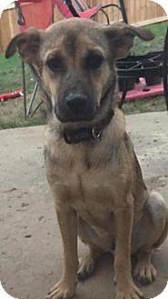 Shepherd (Unknown Type)/Terrier (Unknown Type, Medium) Mix Puppy for adoption in Wyoming, Michigan - D'Artagnan