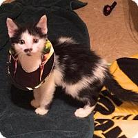 Adopt A Pet :: Ned - Austin, TX
