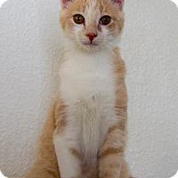 Adopt A Pet :: Pinky - Prescott, AZ