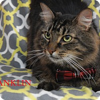 Adopt A Pet :: Frankie - Bucyrus, OH