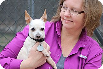 Chihuahua Mix Dog for adoption in Pinehurst, North Carolina - Bear