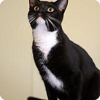 Adopt A Pet :: Winston - Dalton, GA