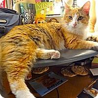 Adopt A Pet :: Kumi - St. Louis, MO
